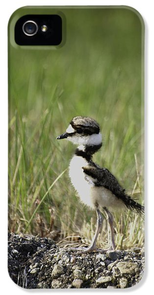 Baby Killdeer 2 IPhone 5 Case by Thomas Young