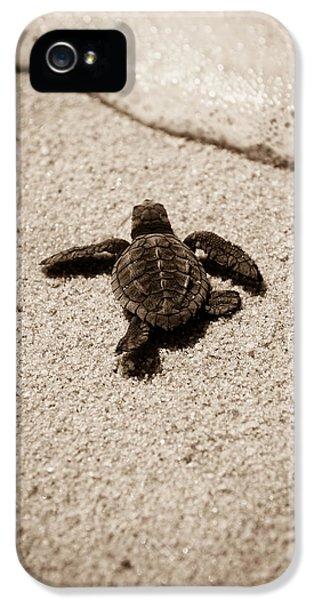 Baby Sea Turtle IPhone 5 Case