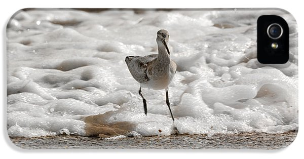 Sandpiper iPhone 5 Case - Back To Safety  by Betsy Knapp