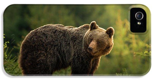 Bear iPhone 5 Case - Backlit Bear by Richard Krchnak