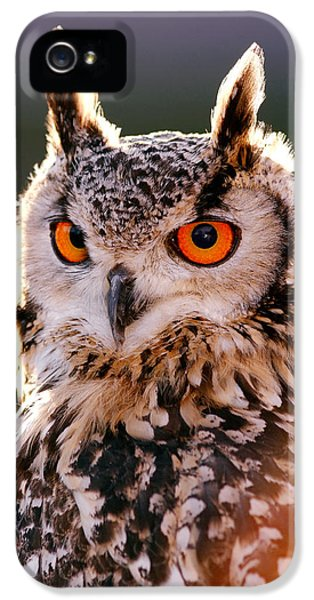 Owl iPhone 5 Case - Backlit Eagle Owl by Roeselien Raimond