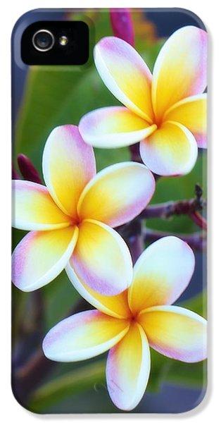 Backyard Plumeria IPhone 5 Case