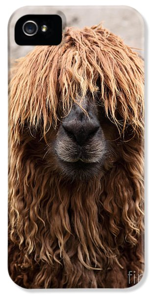 Bad Hair Day IPhone 5 Case by James Brunker