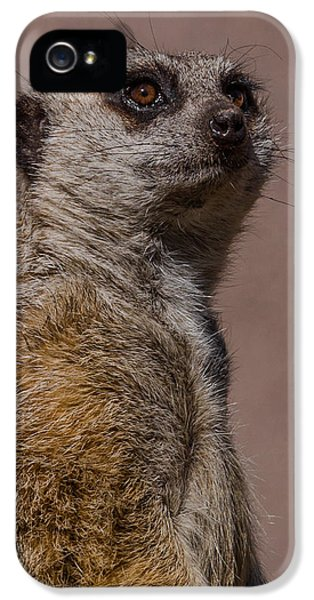 Bad Whisker Day IPhone 5 / 5s Case by Ernie Echols
