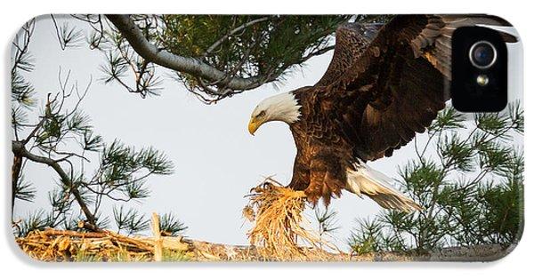 Bald Eagle Building Nest IPhone 5 Case by Everet Regal