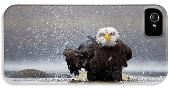 Bald Eagle IPhone 5 Case