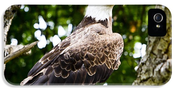 IPhone 5 Case featuring the photograph Bald Eagle by Ricky L Jones