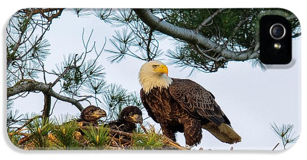Bald Eagle With Eaglets  IPhone 5 Case