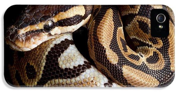 Ball Python Python Regius IPhone 5 Case