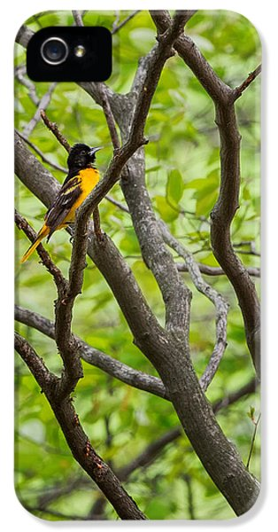 Baltimore Oriole IPhone 5 / 5s Case by Bill Wakeley