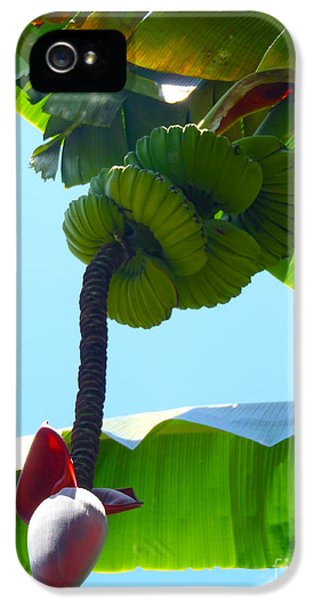 Banana Stalk IPhone 5 Case by Carey Chen
