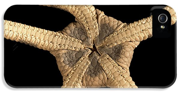 Banded Brittle Star IPhone 5 Case