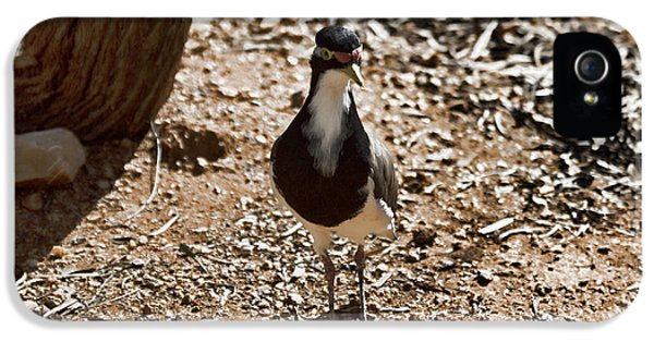 Banded Lapwing IPhone 5 Case by Douglas Barnard