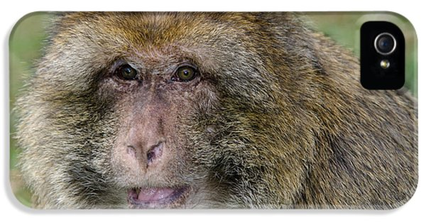 Barbary Macaque IPhone 5 / 5s Case by Nigel Downer