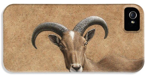 Barbary Ram IPhone 5 Case by James W Johnson