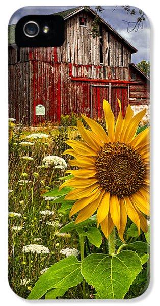 Sunflower iPhone 5 Case - Barn Meadow Flowers by Debra and Dave Vanderlaan