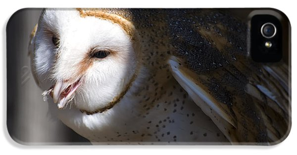 Barn Owl 1 IPhone 5 Case