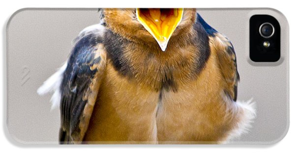 IPhone 5 Case featuring the photograph Barn Swallow by Ricky L Jones