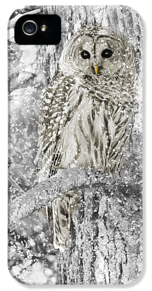 Barred Owl Snowy Day In The Forest IPhone 5 Case by Jennie Marie Schell