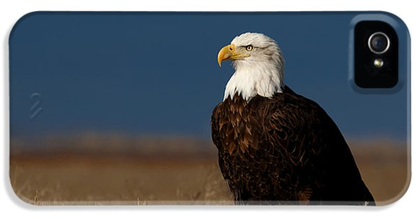 Basking In The Morning Light IPhone 5 Case by Beve Brown-Clark Photography