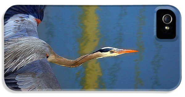 Bay Blue Heron Flight IPhone 5 Case by Robert Bynum
