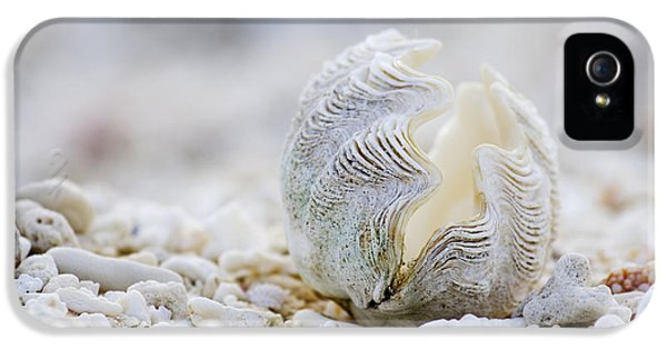 Beach Clam IPhone 5 Case