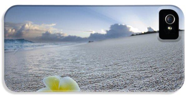 Plumeria Flower iPhone 5 Case - Beach Plumeria by Sean Davey