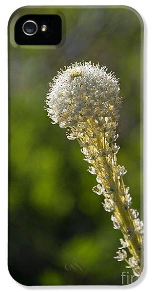 Bear Grass Glow IPhone 5 Case