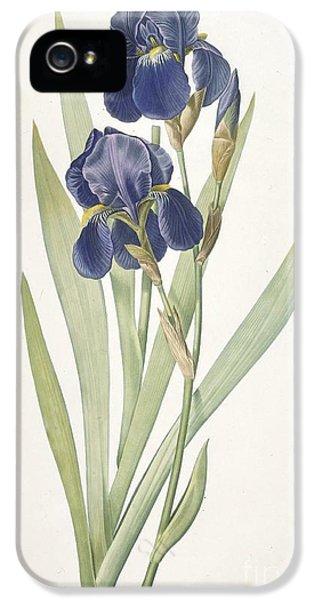 Bearded Iris IPhone 5 / 5s Case by Pierre Joseph Redoute