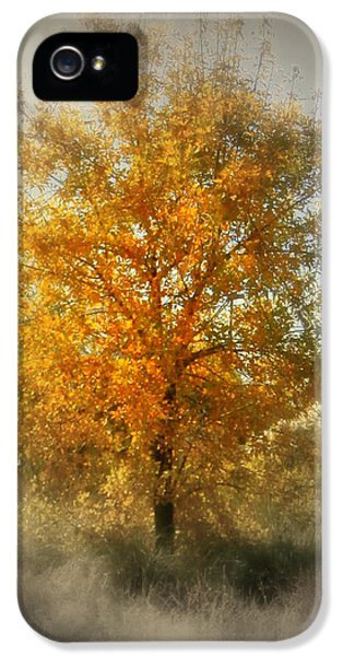 Breathe iPhone 5 Case - Beautiful Golden Tree by Karyn Robinson