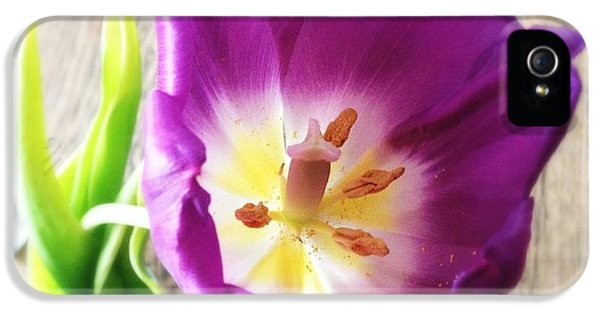 Beautiful iPhone 5 Case - Beautiful Purple Flower From Above by Matthias Hauser
