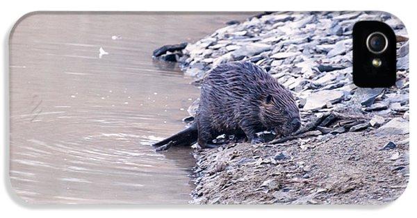 Beaver On Dry Land IPhone 5 Case