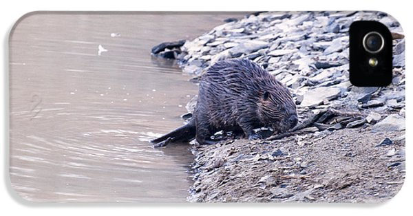 Beaver On Dry Land IPhone 5 Case by Chris Flees