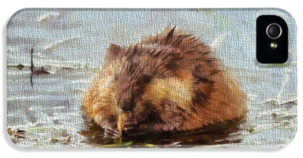 Beaver Portrait On Canvas IPhone 5 Case by Dan Sproul