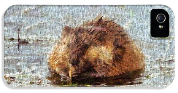 Beaver Portrait On Canvas IPhone 5 Case