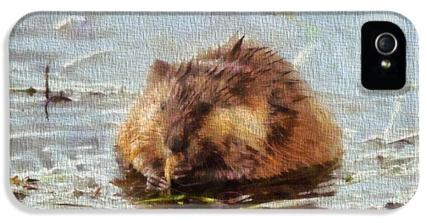 Beaver Portrait On Canvas IPhone 5 / 5s Case by Dan Sproul