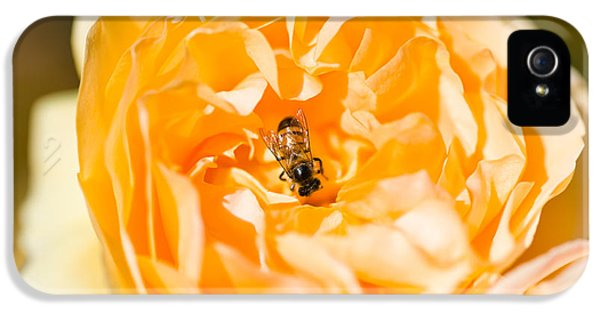 Bee Pollinating A Yellow Rose, Beverly IPhone 5 / 5s Case by Panoramic Images