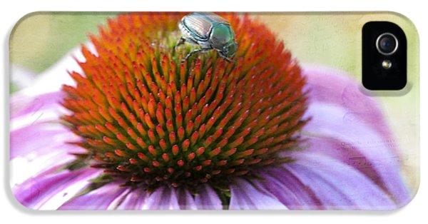 Beetle Bug IPhone 5 Case