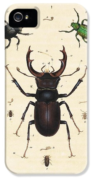 Beetles IPhone 5 Case by King's College London