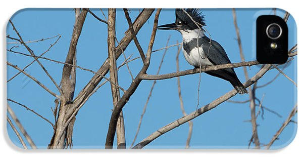 Belted Kingfisher 4 IPhone 5 / 5s Case by Ernie Echols