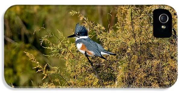 Belted Kingfisher Female IPhone 5 Case