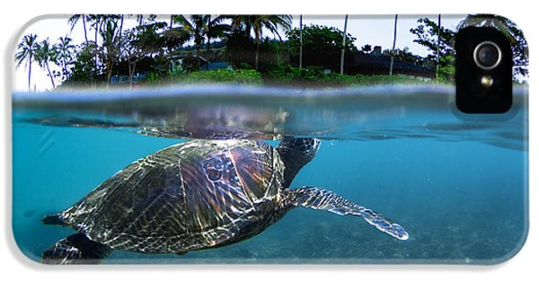 Turtle iPhone 5 Case - Beneath The Palms by Sean Davey