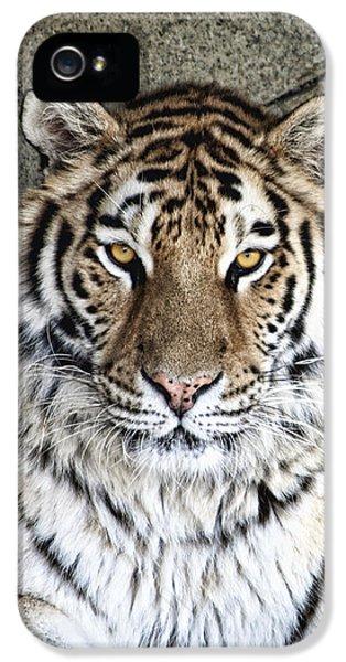 Bengal Tiger Vertical Portrait IPhone 5 Case