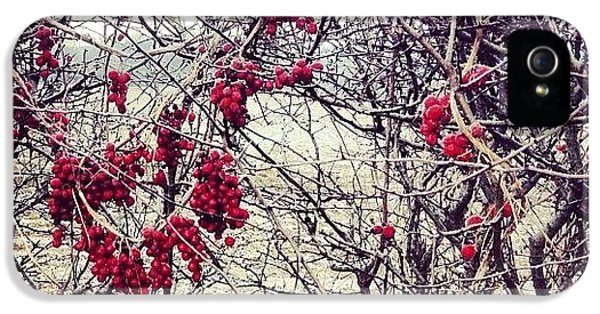 Bright iPhone 5 Case - Berries In The Hedgerow by Nic Squirrell