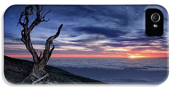 Canary iPhone 5 Case - Beyond The Sky by Andrea Auf Dem
