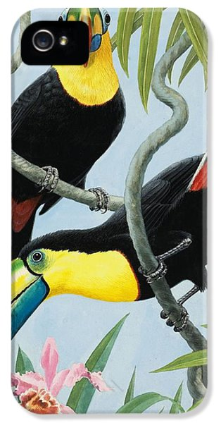 Big-beaked Birds IPhone 5 Case by RB Davis