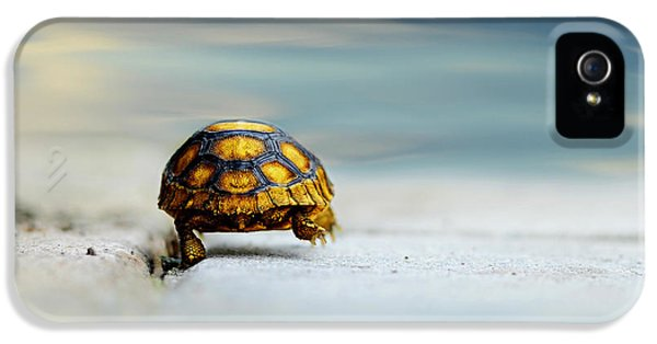 Turtle iPhone 5 Case - Big Big World by Laura Fasulo