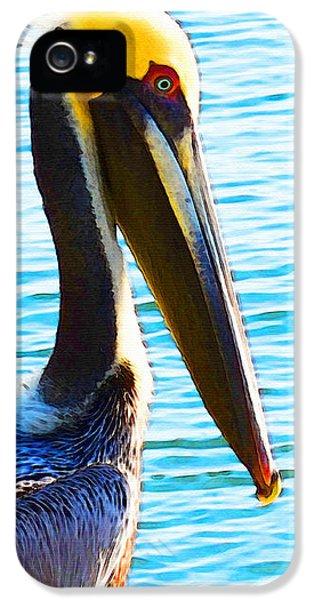Big Bill - Pelican Art By Sharon Cummings IPhone 5 Case by Sharon Cummings