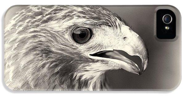 Bird Of Prey IPhone 5 Case by Dan Sproul