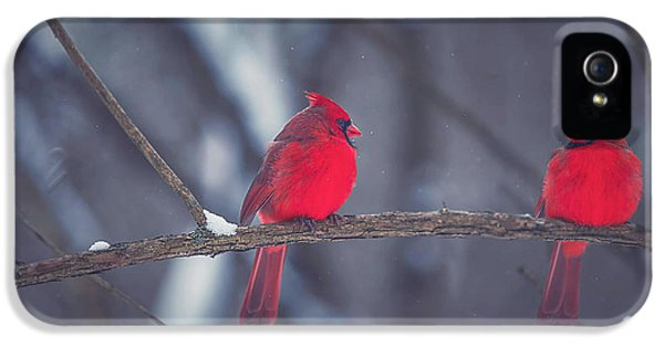 Birds Of A Feather IPhone 5 Case by Carrie Ann Grippo-Pike